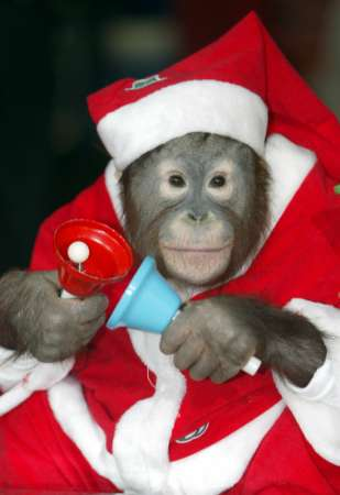 monkeysanta.jpg