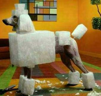 One of Carlos Tevez\'s dogs