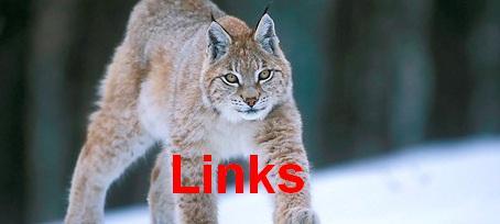 European Lynx-0001