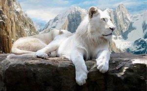 Daniel Sturridge Lion