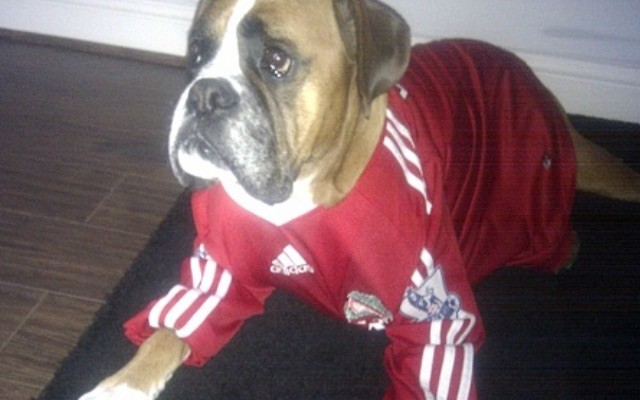 best sneakers 68f34 d95a9 Nine photos of dogs in football kit