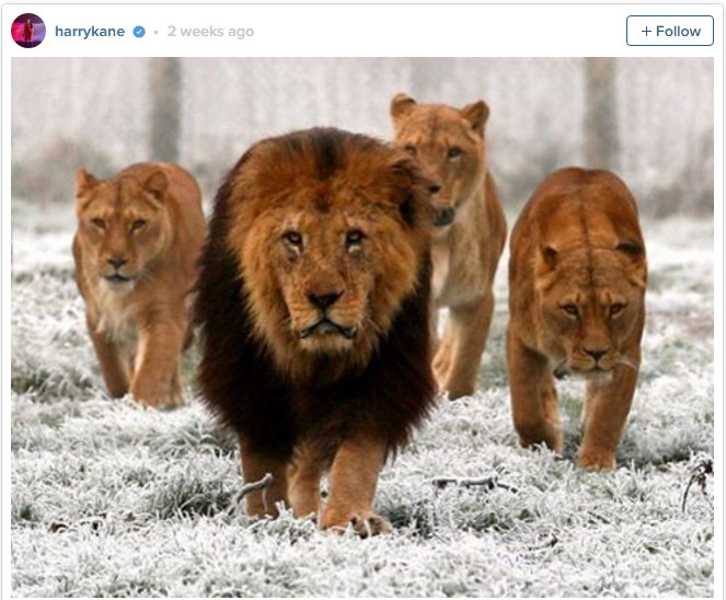 Harry Kane Lion photo