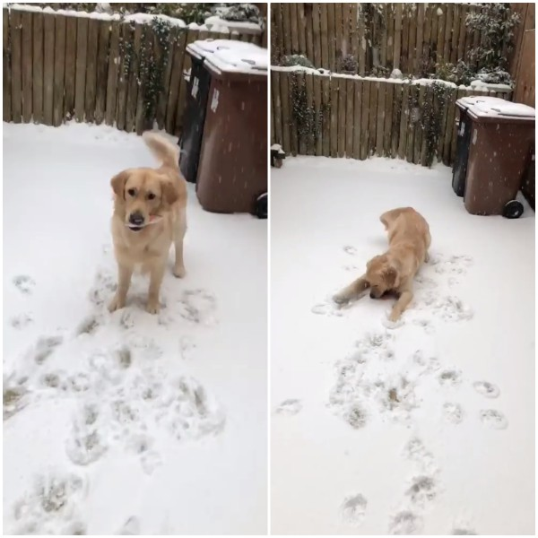 New Atom or Humber enjoying the snow