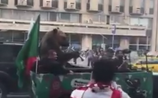 Bear plays vuvuzela in Moscow during 2018 World Cup