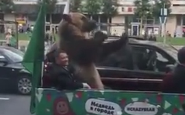 The bear then made an aggressive gesture with its front left paw