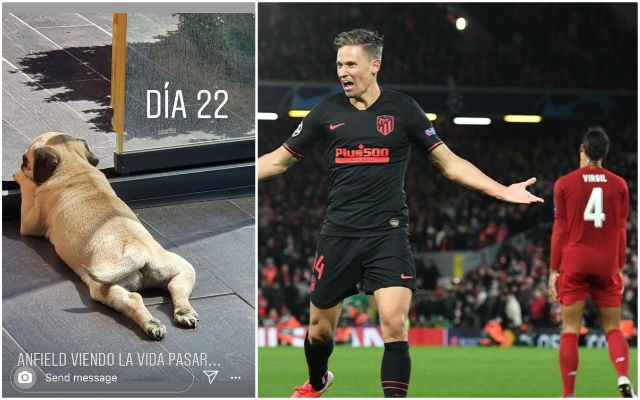 Atletico's Llorente shows off his dog named 'Anfield'