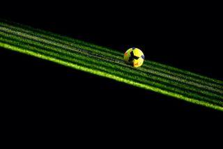 west ham united v west bromwich albion premier league
